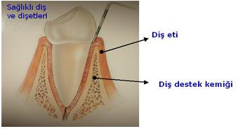 Sağlıklı Diş Etleri